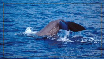 Whale watching at the Cetacean Sanctuary - Photo B