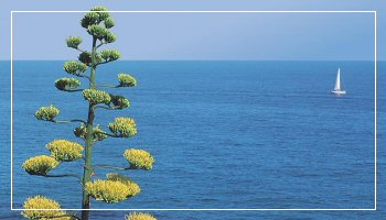 Sea of the Italian Riviera - Photo APT RdF