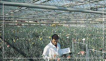 San Remo flowers greenhouse - Photo APT RdF